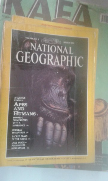 National Geographic March 1992 Apes And Humans*bonobos*macarthur*andes*lake Tahoe